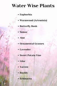 A list of water wise plants that you can use in your garden