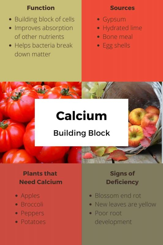 Calcium Uses and Sources