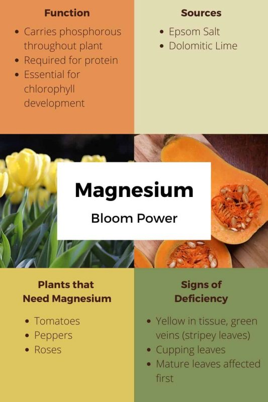 Magnesium Uses and Sources