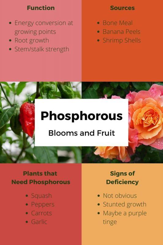 Phosphorous Uses and Sources
