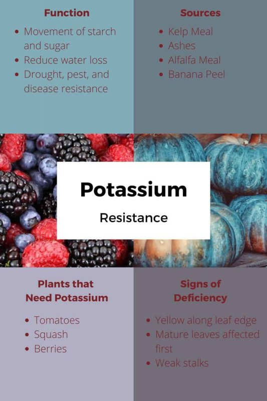 Potassium Uses and Sources